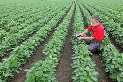 Farmer or agronomist in soy field Stock Photos