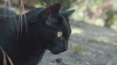 Cute Black Cat Watches Birds Outside Stock Footage