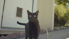 Black Cat Goes Through Pet Door Stock Footage