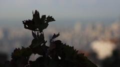 Beirut Skyline Stock Footage
