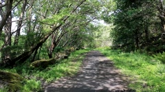 Forest path in Cambusbarron stirling - stock footage
