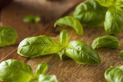 Raw Organic Green Basil Stock Photos