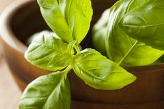 Raw Organic Green Basil - stock photo