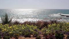 Beach with flowers near the sea 2 Stock Footage