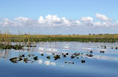 Wetland Stock Photos