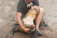 Alligator Stunt Kuvituskuvat