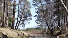 A small forest lake. Birds are singing. Siberia. Khakassia. Stock Footage