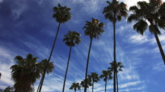 Palm Trees and Clouds Time-Lapse - stock footage