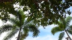 Public park name Hat Saen Suk Lampam Stock Footage