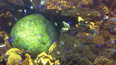 Tropical color fishes in an aquarium Stock Footage