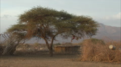 Rift Valley Tribal Hut with WS family herding goats Stock Footage
