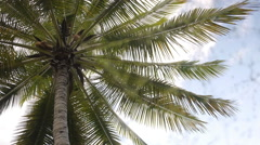 Coconut tree, palm tree Stock Footage