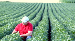 Young farmer in soybean field. Stock Footage