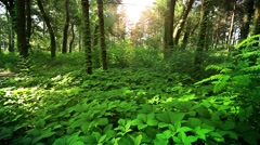 A quiet place in the woods, trees, grass Stock Footage