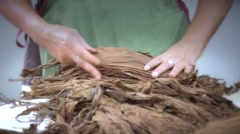 Selecting tobacco leaves Stock Footage