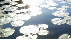 Lily pad with sun reflecting down Stock Footage