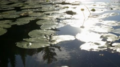 Lily pad with sun reflecting down- static shot Stock Footage