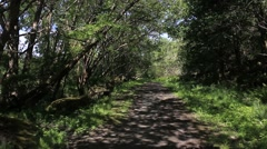 Forest path  Cambusbarron Stirling - stock footage