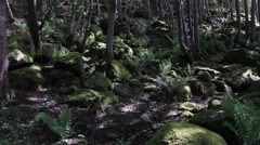 Shaded forest  Cambusbarron Stirling Stock Footage