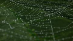 Morning dew on a spider web. animation Stock Footage