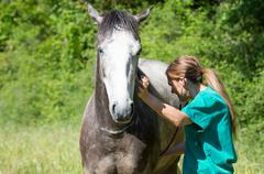Equine veterinary - stock photo
