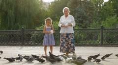 Feeding Birds In A Park Stock Footage