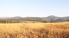 Swaziland open field Stock Footage