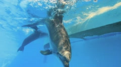 Dolphins In A Pool Underwater Stock Footage