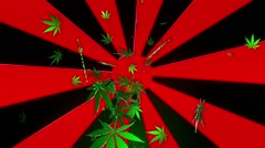 Abstract sunburst with cannabis leaves on black background Stock Footage
