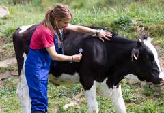 Veterinary on a farm Stock Photos