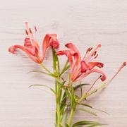 Fresh  spring red flowers on wood. Toned image. - stock photo
