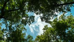 canopy tree and moving clouds timelapse - stock footage