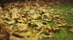 Rack focus of fall leaves on the ground Stock Footage