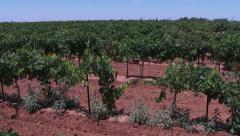 A Texas vinyard Stock Footage