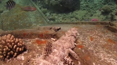 Crocodile fish on Ship Wreck Stock Footage