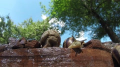 Wild snails 1 Stock Footage