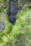 Madeira jungle - stock photo