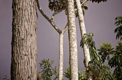 Stock Photo of Escambray jungle