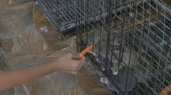 Asian child feeding carrot for cute rabbits in a cage - stock footage