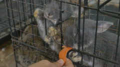 Asian child feeding carrot for cute rabbits in a cage Stock Footage