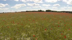 Low level flight over a field of poppy Stock Footage
