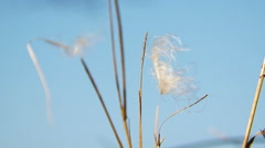 White Feather On Blade Of Grass Moved By The Wind Stock Footage