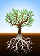 Tree in earth with roots - stock illustration
