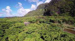 Aerial Shoot of jungle Haena State Park on island of Kauai. Hawaii. Stock Footage
