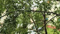 summer rain - stock footage