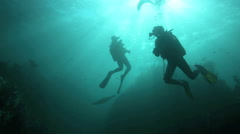 Cape fur seals swimming playfully around scuba divers underwater - stock footage