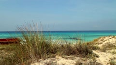View of marram grass along the sea coast in Spain Stock Footage