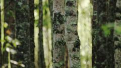 Driving Through Alaska Green Fern Mossy Forrest Dolly Shot Stock Footage