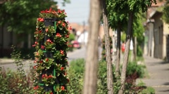 Road clip with flowers and cars with low depth of field Stock Footage