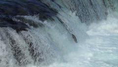 Approximately 30 salmon jumping by Falls Stock Footage